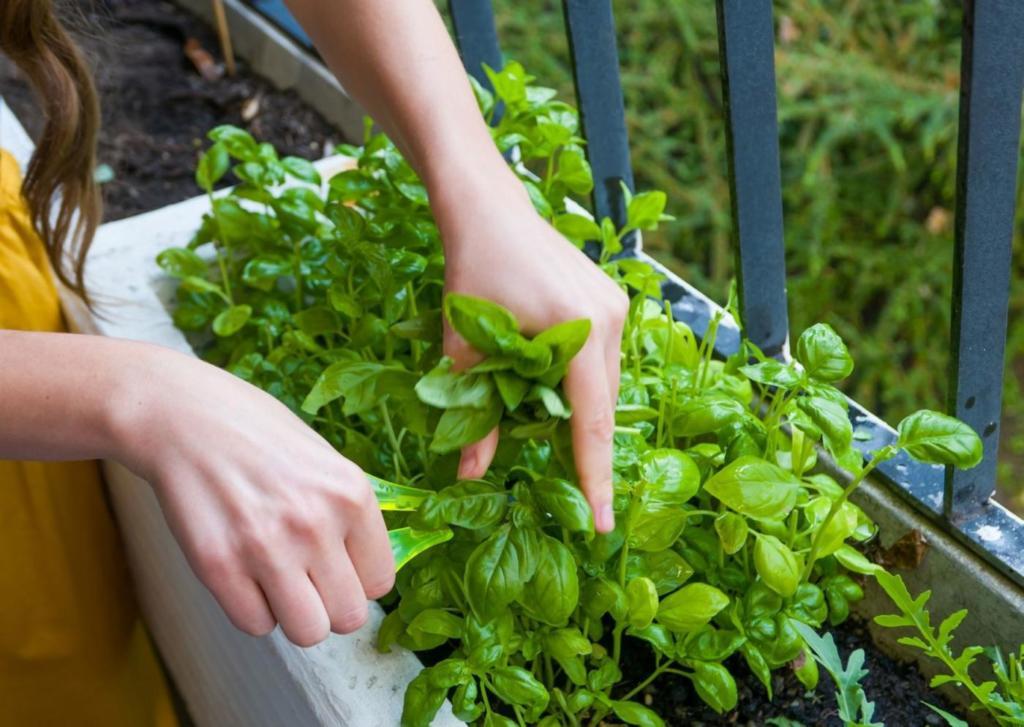 spaarwenke maak 'n groentetuin